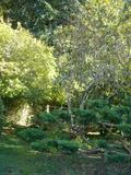 Rendez Vous aux Jardins 2018 -Visite du jardin de Lacombe