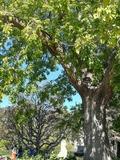 Rendez Vous aux Jardins 2018 -«Biodiver'activités»