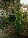 Rendez Vous aux Jardins 2018 -Chantier participatif au potager de la REcyclerie