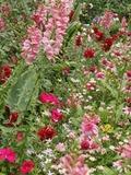 Rendez Vous aux Jardins 2018 -Circuit art et jardins dans le centre-ville - plusieurs jardins au départ de Blossac