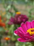 Rendez Vous aux Jardins 2018 -Circuit découverte de jardins