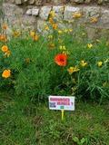 Journées du patrimoine 2016 -Circuit « Patrimoniales… Ces mauvaises herbes ! »