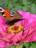 Journées du patrimoine 2016 -Coccinelles, abeilles et papillons, alliés du jardinier