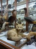Journées du patrimoine 2016 -Collections du Muséum de Chambéry