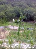 Rendez Vous aux Jardins 2018 -Comment optimiser son jardin au m2 près