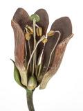 Rendez Vous aux Jardins 2018 -Conférence botanique à partir des fleurs du Dr Auzoux exposées