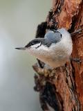 Rendez Vous aux Jardins 2018 -Conférence sur l'observation des oiseaux dans la Dombes.
