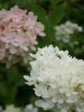 Rendez Vous aux Jardins 2018 -Déambulation dans les jardins d'Ewen, des jardins très nature.