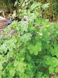 Rendez Vous aux Jardins 2018 -Découverte d'un jardin en permaculture