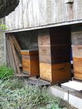 Rendez Vous aux Jardins 2018 -Découverte de l'apiculture au jardin d'abeilles