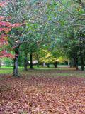 Rendez Vous aux Jardins 2018 -Découverte de l'arboretum
