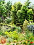 Rendez Vous aux Jardins 2018 -Découverte de l'univers des bambous