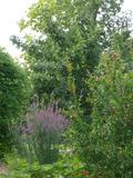 Rendez Vous aux Jardins 2018 -Découverte de l'univers des jardins de Pomone