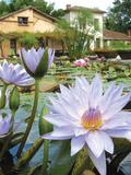 Rendez Vous aux Jardins 2018 -Découverte de l'univers des lotus et nénuphars
