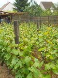 Rendez Vous aux Jardins 2018 -Découverte de la vigne du plateau Saint-Martin