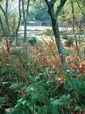 Rendez Vous aux Jardins 2018 -Découverte de Val Maubrune