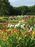 Rendez Vous aux Jardins 2018 -Découverte des jardins avec la propriétaire-jardinière