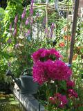 Rendez Vous aux Jardins 2018 -Découverte des jardins solidaires