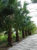 Rendez Vous aux Jardins 2018 -Découverte des plantes européennes