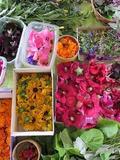 Rendez Vous aux Jardins 2018 -Découverte des plantes médicinales et des plantes couleurs