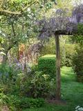 Rendez Vous aux Jardins 2018 -Découverte du jardin de charme où s'épanouit jardin d'agrément à l'anglaise, potager et verger conduits de manière naturelle..