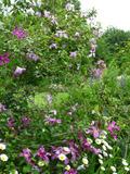 Rendez Vous aux Jardins 2018 -Découverte du jardin de Ginette