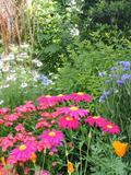 Rendez Vous aux Jardins 2018 -Découverte du jardin du Plantis
