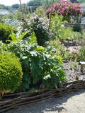 Rendez Vous aux Jardins 2018 -Découverte du jardin médiéval de Dignac