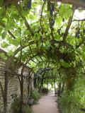 Rendez Vous aux Jardins 2018 -Découverte du jardin monastique