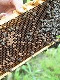 Rendez Vous aux Jardins 2018 -Découverte du monde des abeilles