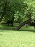 Rendez Vous aux Jardins 2018 -Découverte du parc Deslandres.