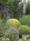 Rendez Vous aux Jardins 2018 -Découverte et dégustation des fleurs comestibles de nos jardins