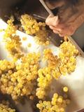 Journées du patrimoine 2016 -Découvrez les Climats du vignoble de Bourgogne à Beaune !