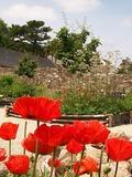 Rendez Vous aux Jardins 2018 -Découvrez les jardins de simples de l'ancienne abbaye en visite guidée ou par un atelier culinaire