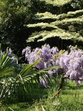 Rendez Vous aux Jardins 2018 -Découvrez les richesses de la Villa Kernetra