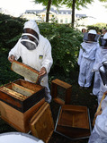 Journées du patrimoine 2016 -Découvrir l'apiculture urbaine. Atelier-rencontre avec l'apiculteur du Château de la Muette