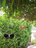 Rendez Vous aux Jardins 2018 -Démonstration de verrerie dans le jardin de Sylvi Pasquier