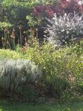 Rendez Vous aux Jardins 2018 -Détectives en herbes