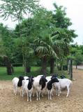 Rendez Vous aux Jardins 2018 -Découverte commentée du parc mélangeant végétal et animal