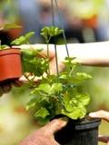 Rendez Vous aux Jardins 2018 -Partage de plantes - Domaine de Trévarez