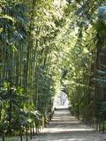 Journées du patrimoine 2016 -Bambouseraie de Prafrance