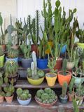 Rendez Vous aux Jardins 2018 -Découverte de l'univers des cactus et des plantes grasses