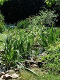 Rendez Vous aux Jardins 2018 -Découverte du jardin des Bucoliques