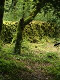 Journées du patrimoine 2016 -Entre nature et histoire locale, découvrir la Réserve Naturelle Nationale de la grotte de Hautecourt