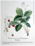 Rendez Vous aux Jardins 2018 -Exposition de planches botaniques