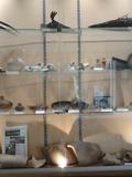 Journées du patrimoine 2016 -Exposition du patrimoine archéologique de Saint-Cyr-sur-Loire
