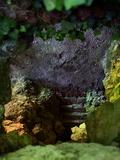 Rendez Vous aux Jardins 2018 -Exposition photographique au parc de Méréville - La vie actuelle des ruines