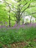 Rendez Vous aux Jardins 2018 -Visite libre du parc et des jardins du château de Figon
