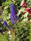 Rendez Vous aux Jardins 2018 -Visite guidée du jardin du manoir d'Hellenvilliers