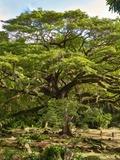 Rendez Vous aux Jardins 2018 -Jardin de l'Habitation Céron :
